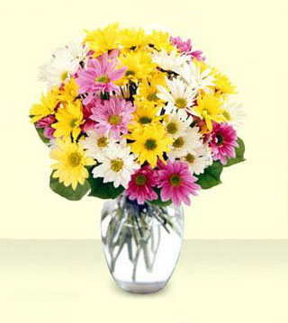 FTD's Mixed Daisy Bouquet